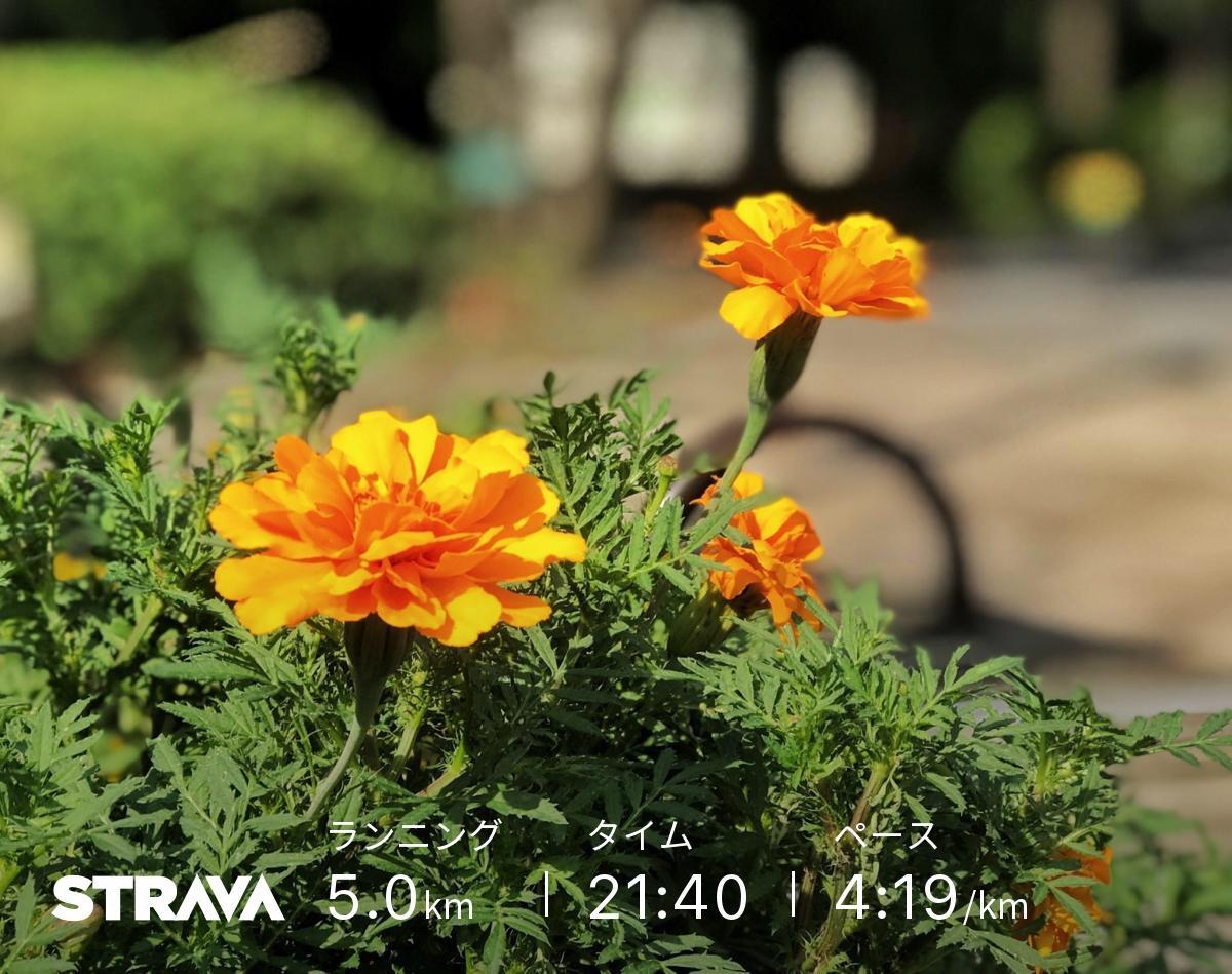 花の写真-2018.9.18
